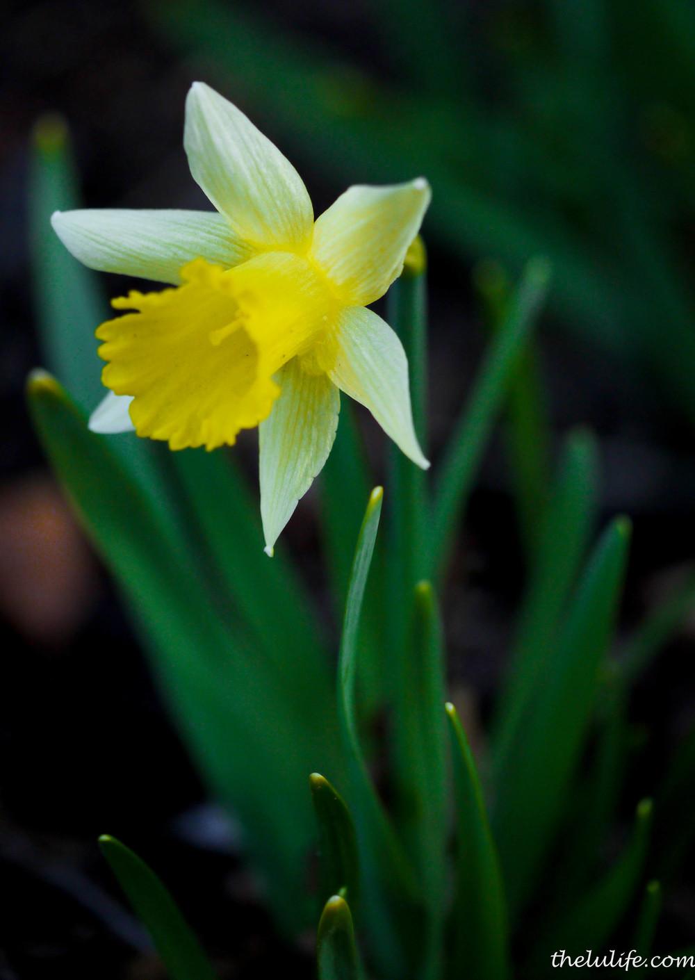 P1040483 Flower