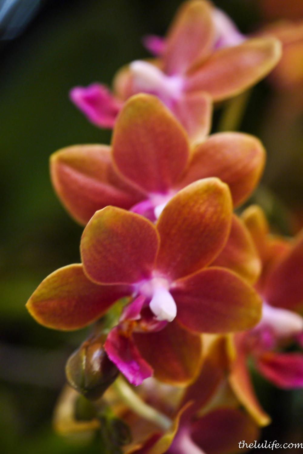 P1040535 Orchids