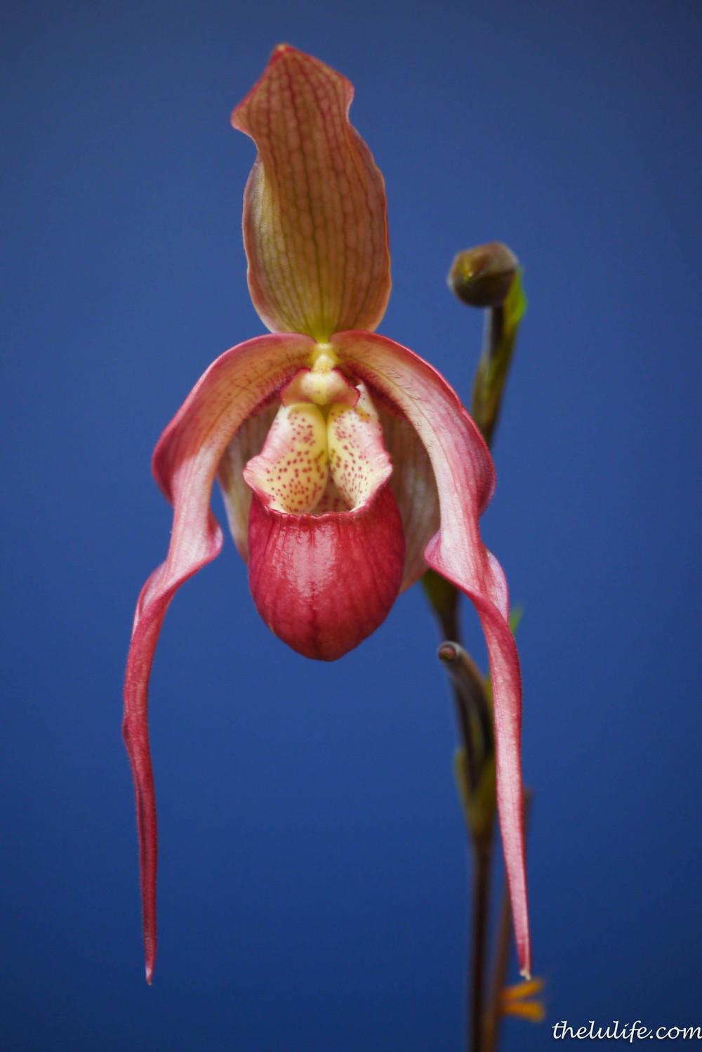 P1040540 Orchids
