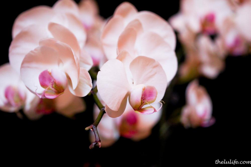 P1040542 Orchids