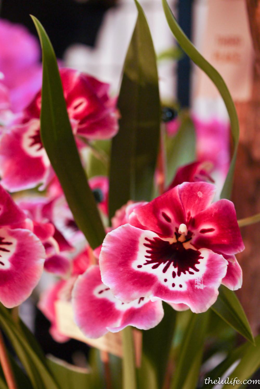 P1040543 Orchids