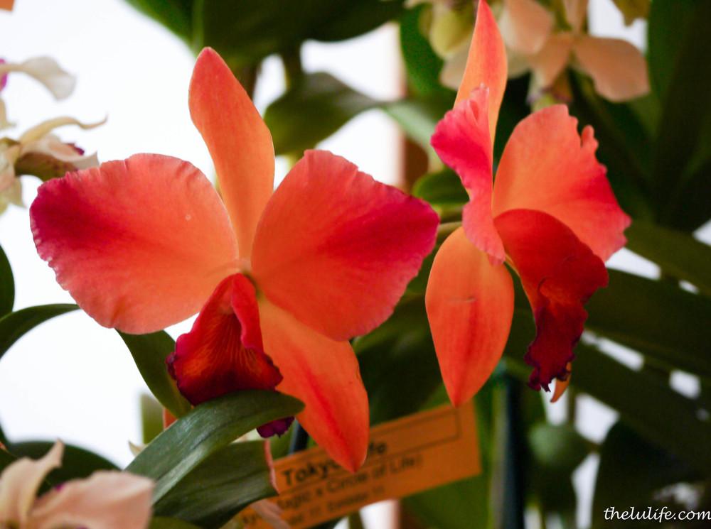 P1040557 Orchids