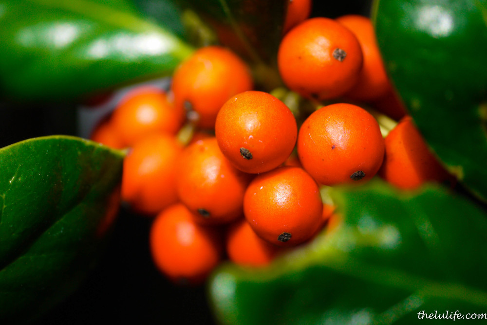P1040597 Berries