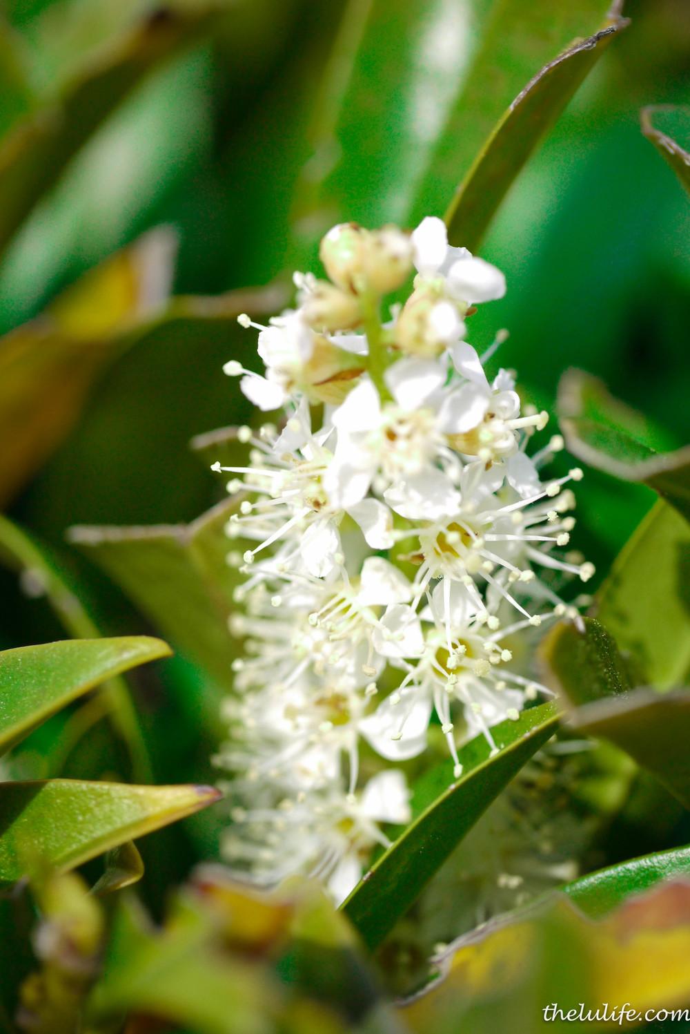 P1040609 White flowers