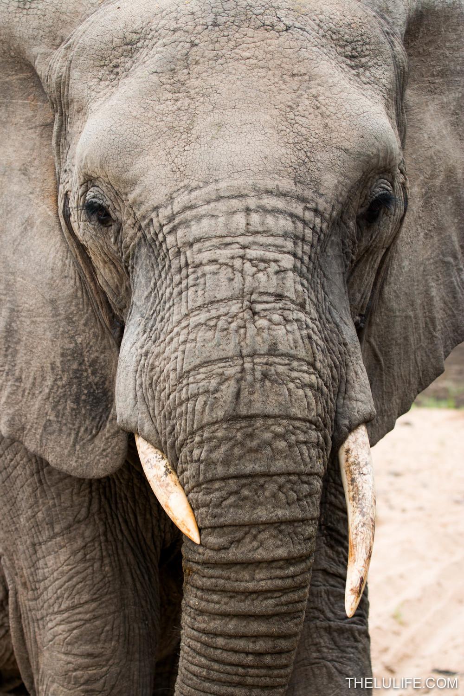 IMG_1680-2 Elephant