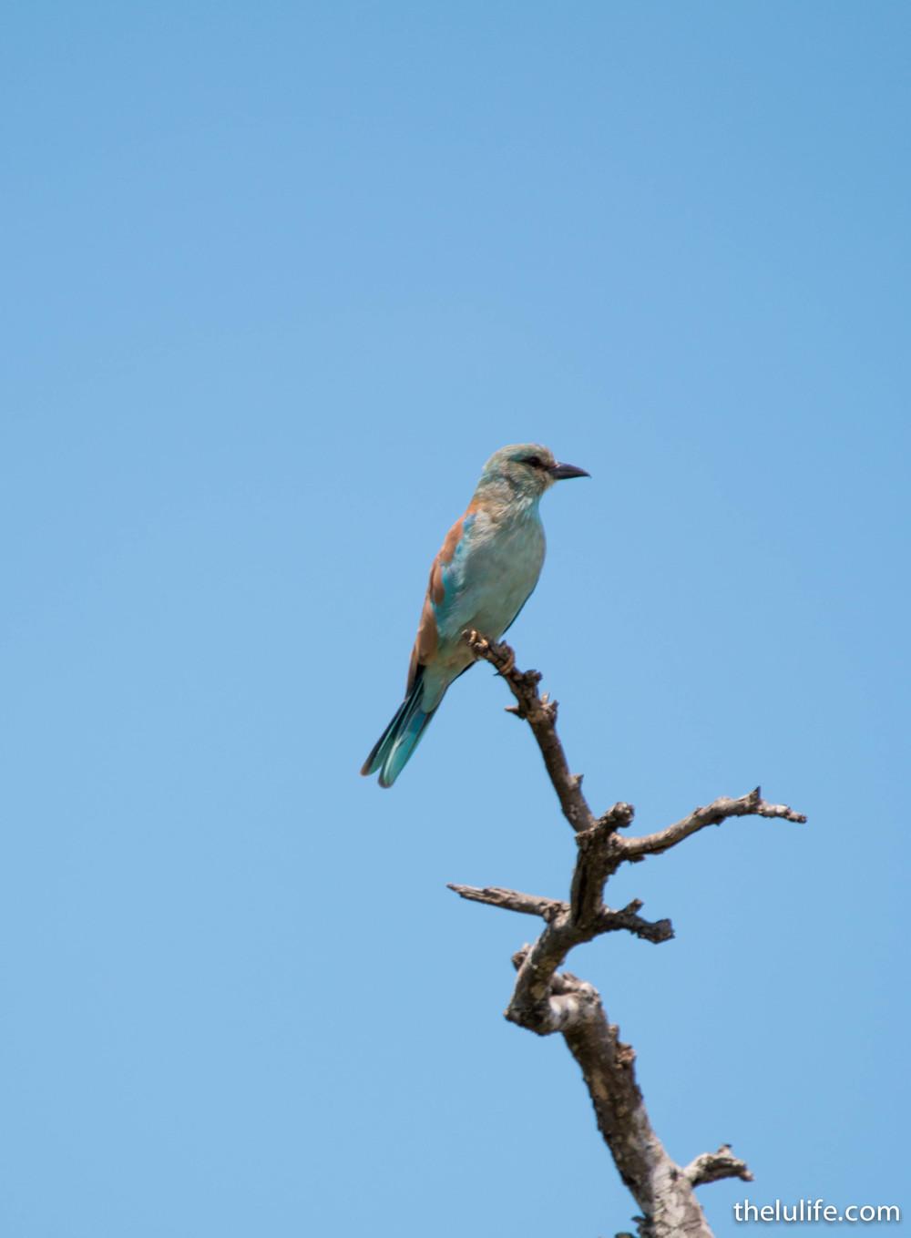 IMG_2341 Bird