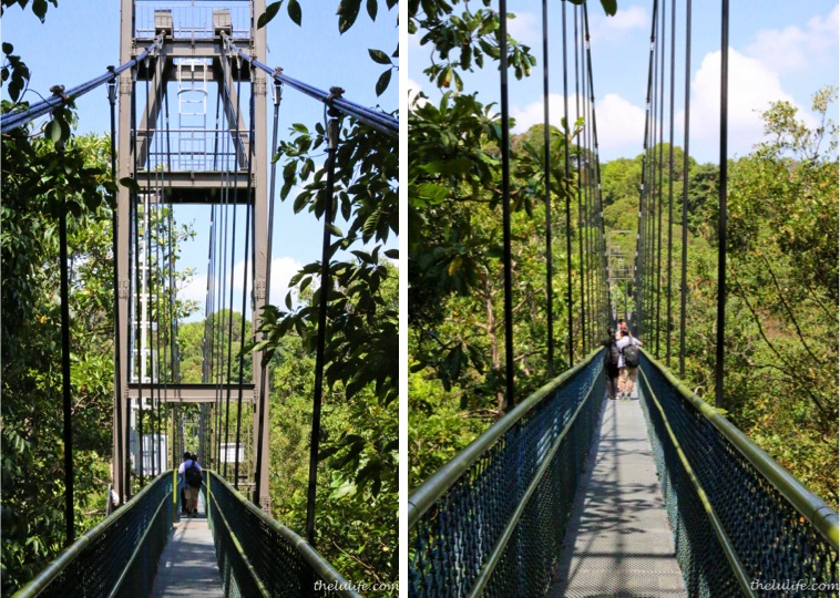 Suspension bridge at TreeTop Walk