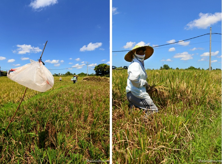 Left: bug catcher Right: rice picker