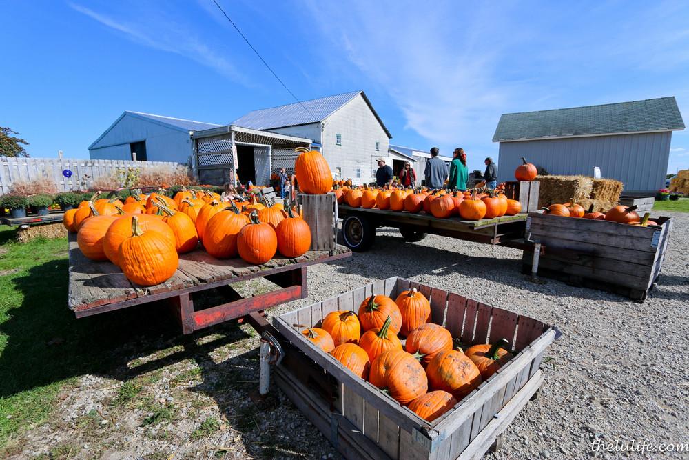IMG_9481 Pumpkins