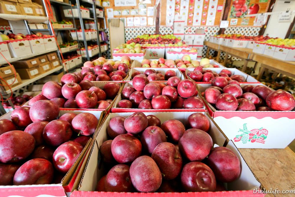 IMG_9491 Apples