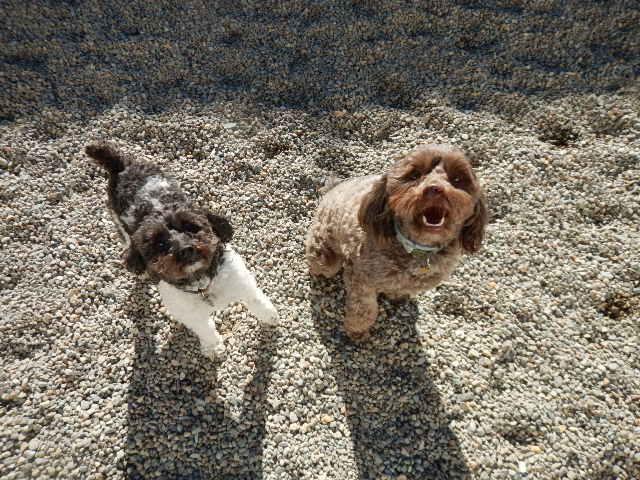 Ella and Dizzy M2.JPG