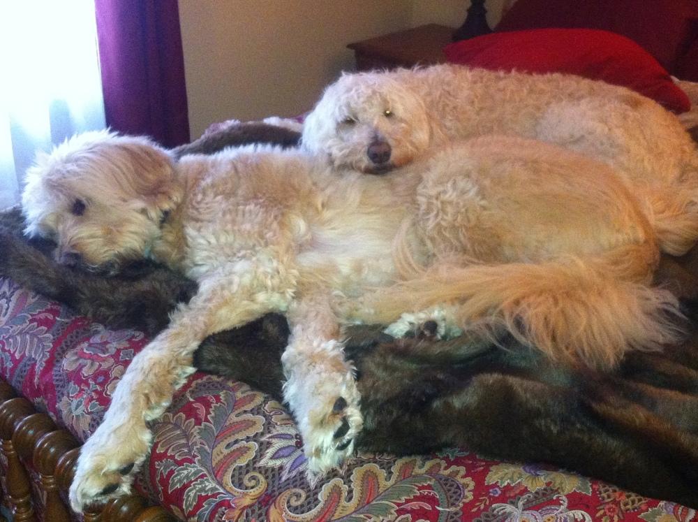 loki and luna on bed 2014.JPG