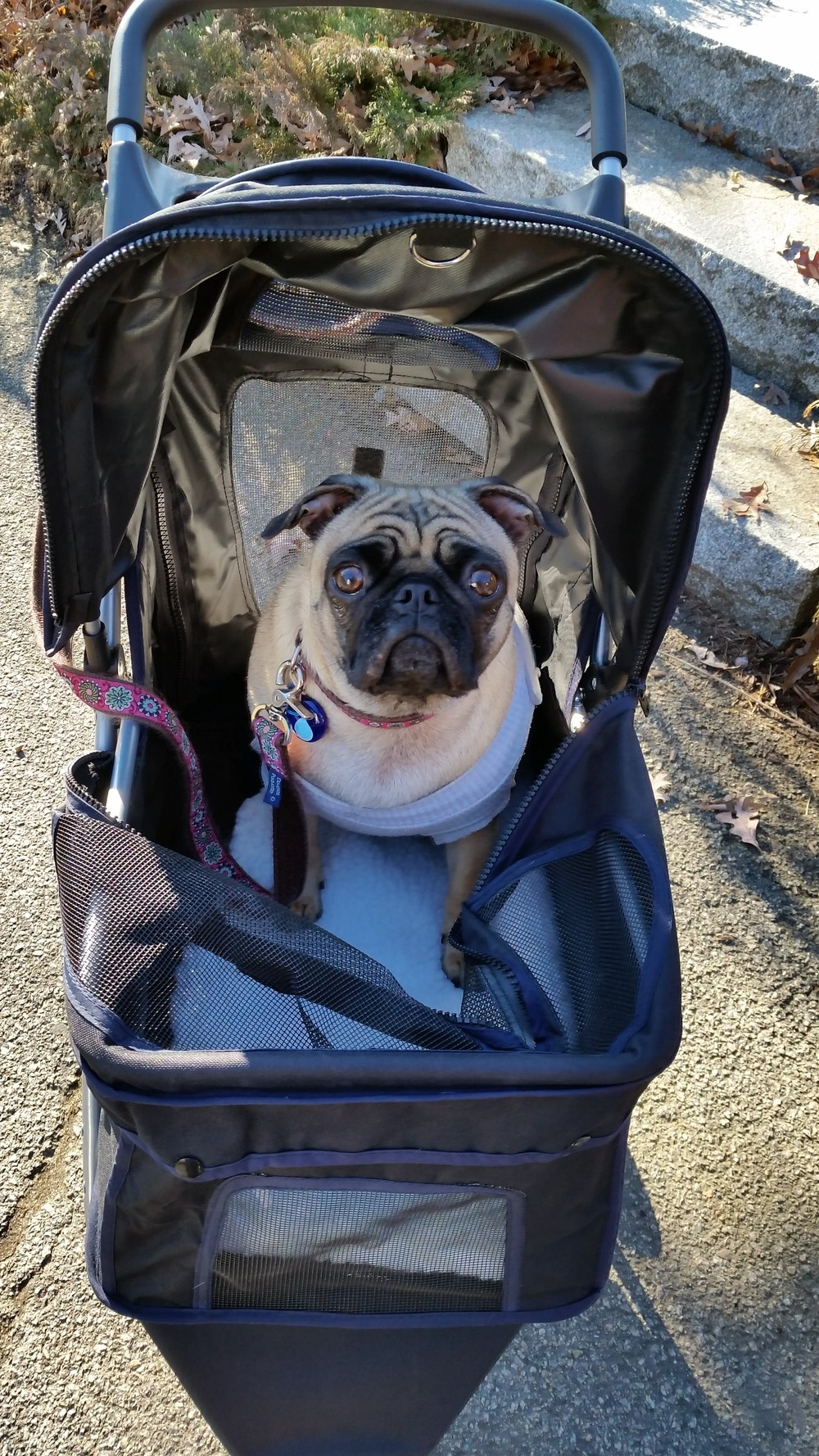 Lucy M in her buggy.jpg