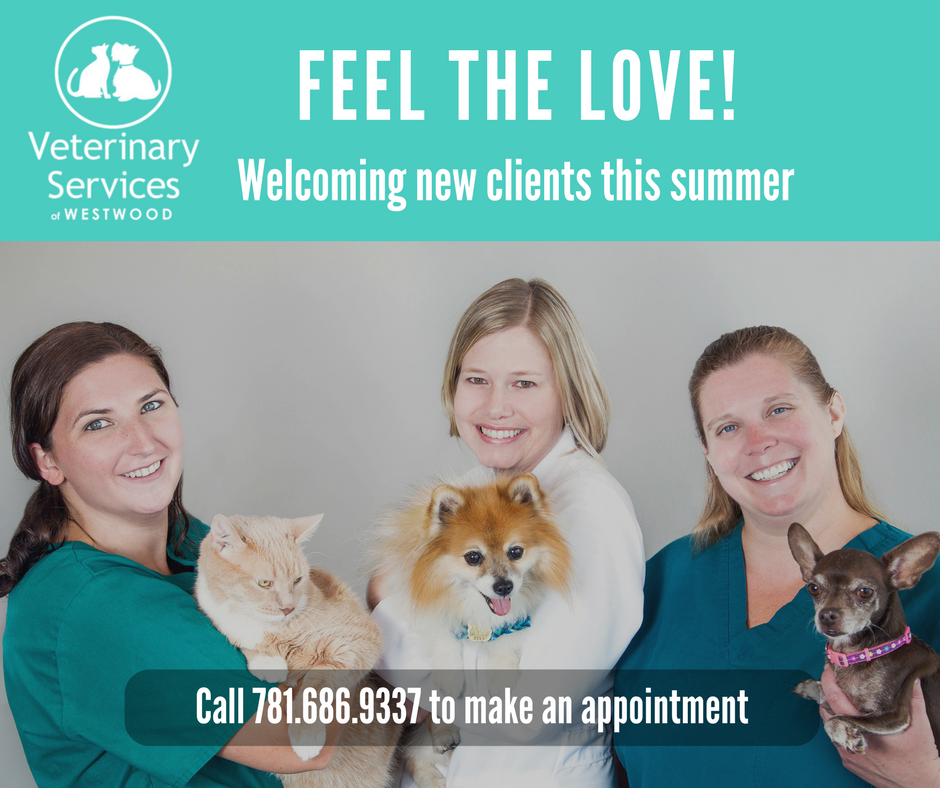 Check out our special savings offer for new clients: 50% off your pet's first wellness exam when you mention code NEWCLIENT.* *Expires 8/30/17
