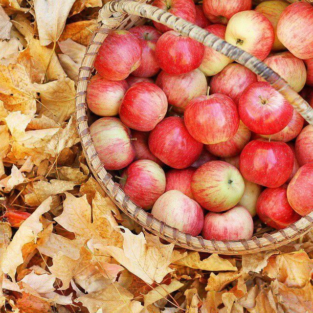 Psicologa Bergamo - Aprirsi agli altri ci fa raccogliere frutti preziosi