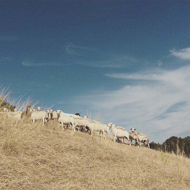 About the project - GSW is a multidisciplinary program for new and beginning graziers that combines animal husbandry with regenerative methods & strategies for the business of:Ranching & Grazing Food & Fiber ProductionProduct & Services MarketingEcological Land StewardshipConservation & Climate Sensitive Land Management