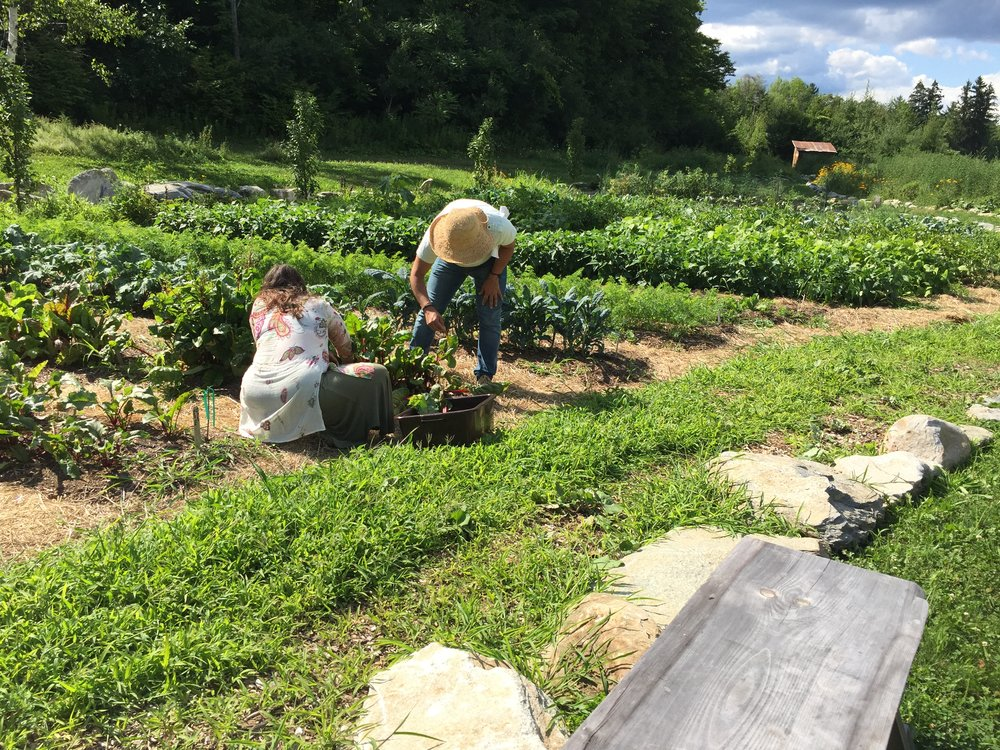 The Organic Farm Was Begun In 2014 . Seasonal Vegetables And Herbs And Are  Grown For The Residents And Events Hosted By Marble House Project.