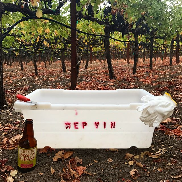 It's that time again! Harvest 2018 is officially underway! #harvest2018 #cabernetsauvignon #cabernet #calistogaava #calistogawinegrowers #calistoga #napavalley #napacounty #winecountry