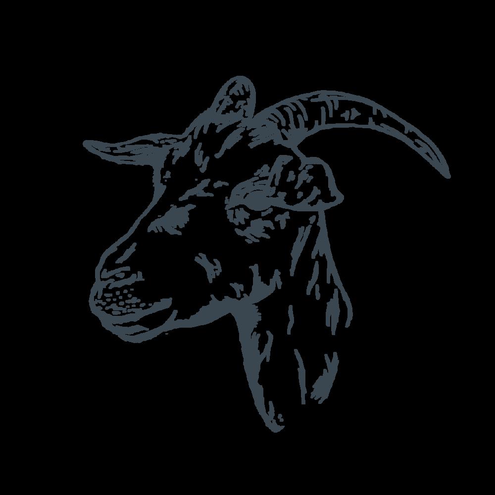 goat-01.png