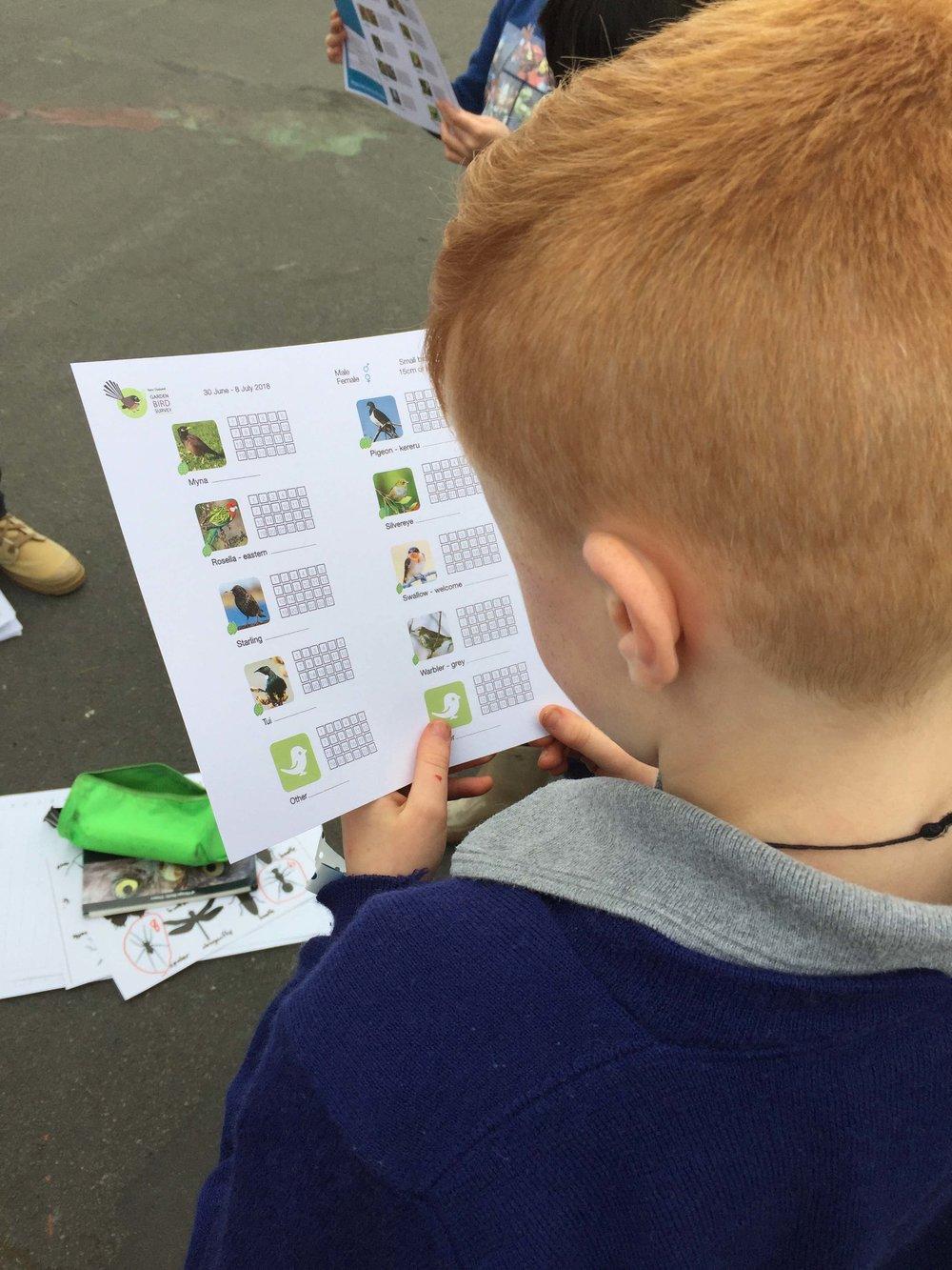 Bird survey