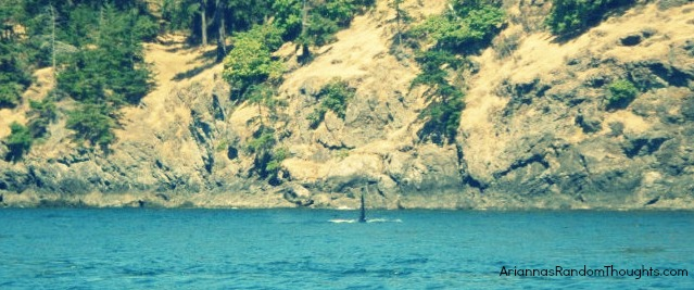 One of the things I did this summer was go whale watching.