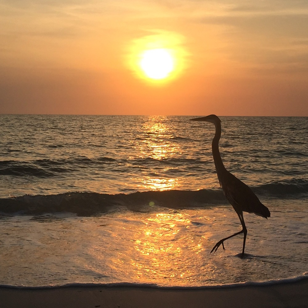 A very nice bird in Naples, Florida.