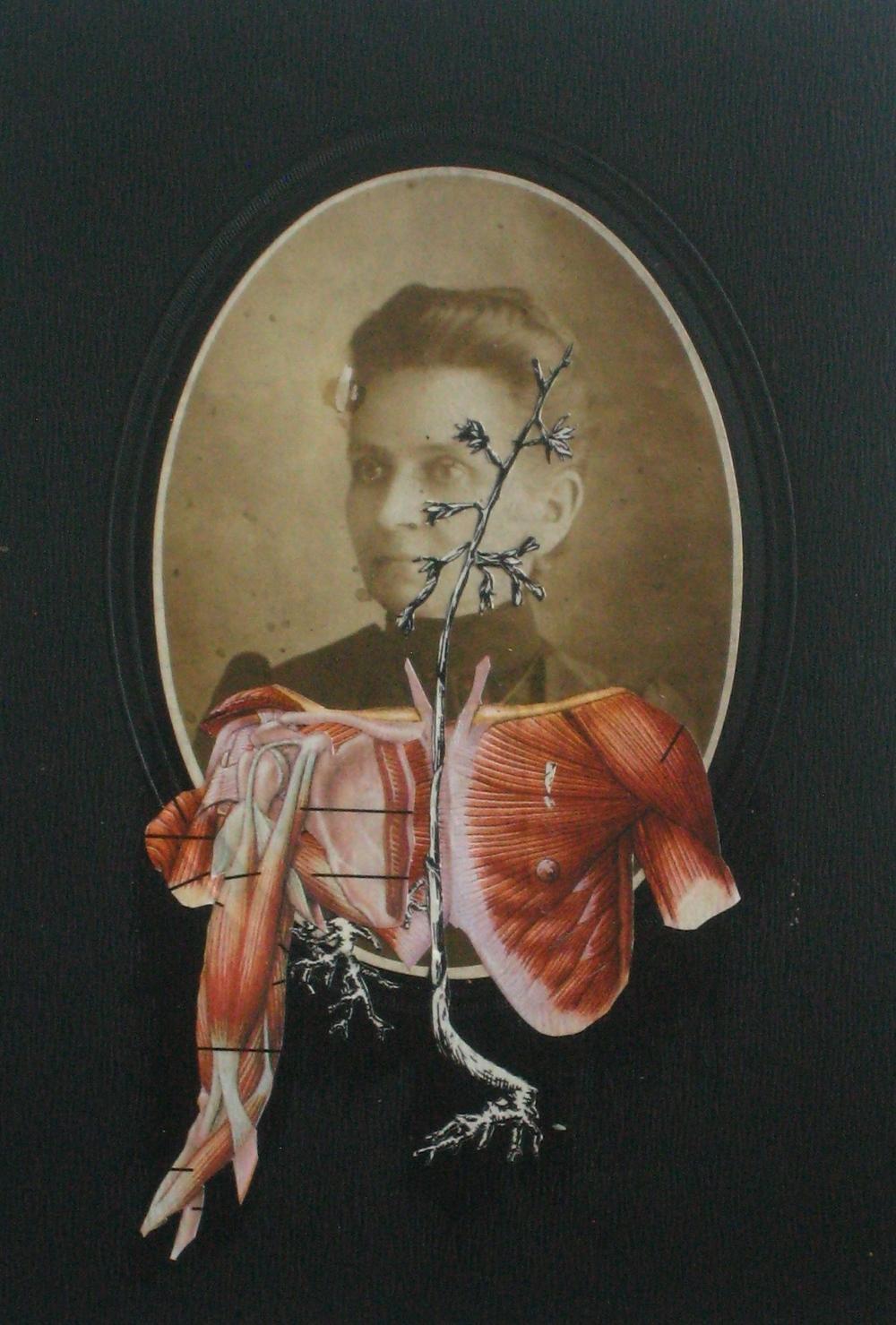 Crudus Lucida