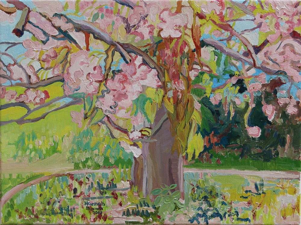 Cherry tree / Třešeň