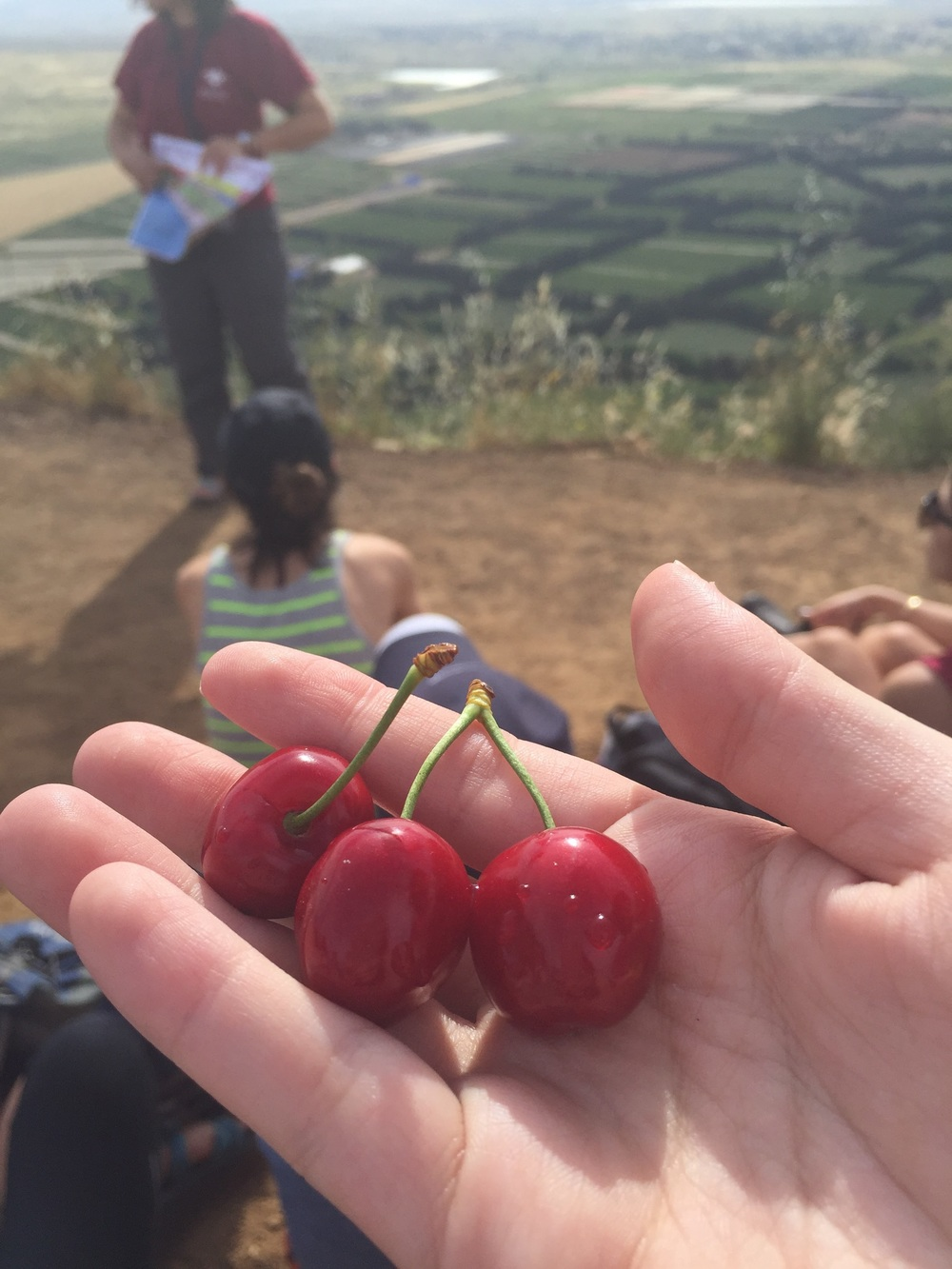 Cherries purchased on the side of a road on top of a mountain
