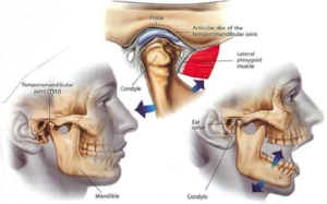 Anatomy of the TMJ