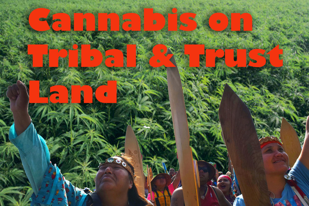 Cannabis on tribal.jpg