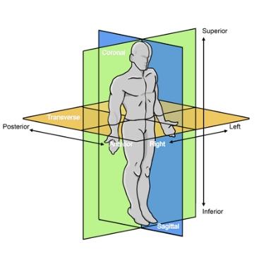 アライメントバイオメカニクス -  左右非対称である骨格アライメントを各関節アライメント連鎖パターンにより評価。マルアライメント(アライメントの崩れ)を理解し、骨格筋機能・外傷 / 疼痛が起こり得る部位を明確に把握する。
