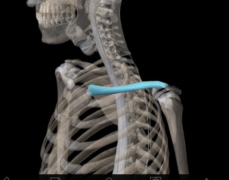 フィジカル(身体)・関節ROM テスト -  マルアライメントパターンによる、筋以外の軟部組織 / 骨アライメントによるROM(可動域)制限・筋機能低下部位をメカニズムから理解する。