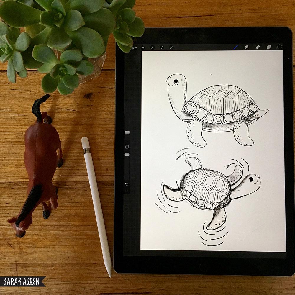 Sarah_Allen_turtles.jpg