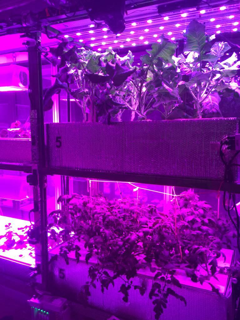 cityfarm plants.jpg