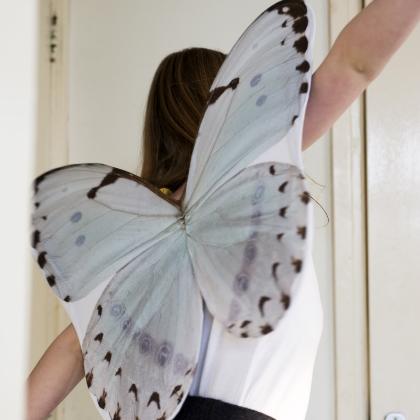 Spread your little Wings