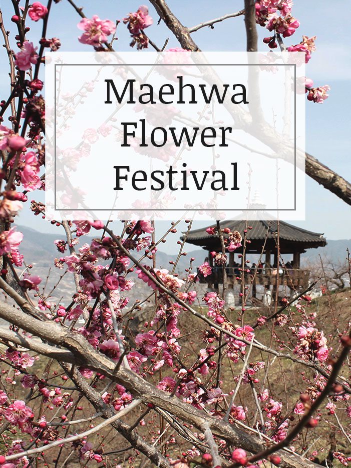 Maehwa-Flower-Festival.jpg