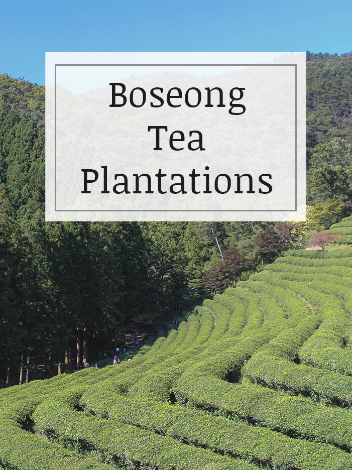 Visit-the-tea-plantations-in-Boseong.jpg