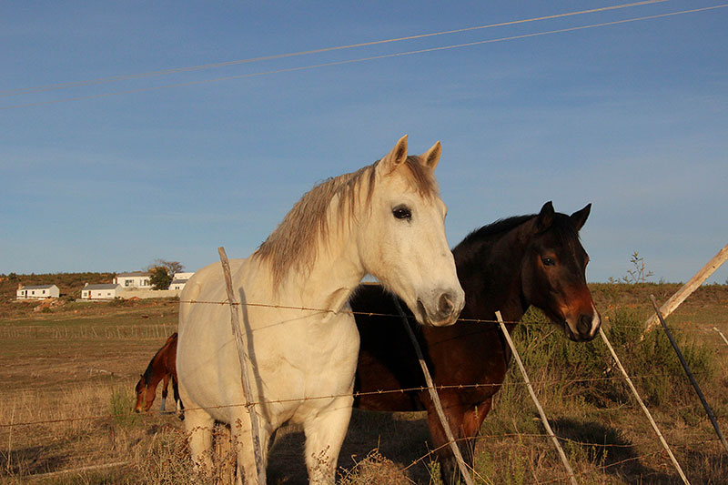 Weekend_Getaways_near_Cape_Town_Groot_Winterhoek_Budget_Affordable_Activities_Porterville_mountains_horses.jpg