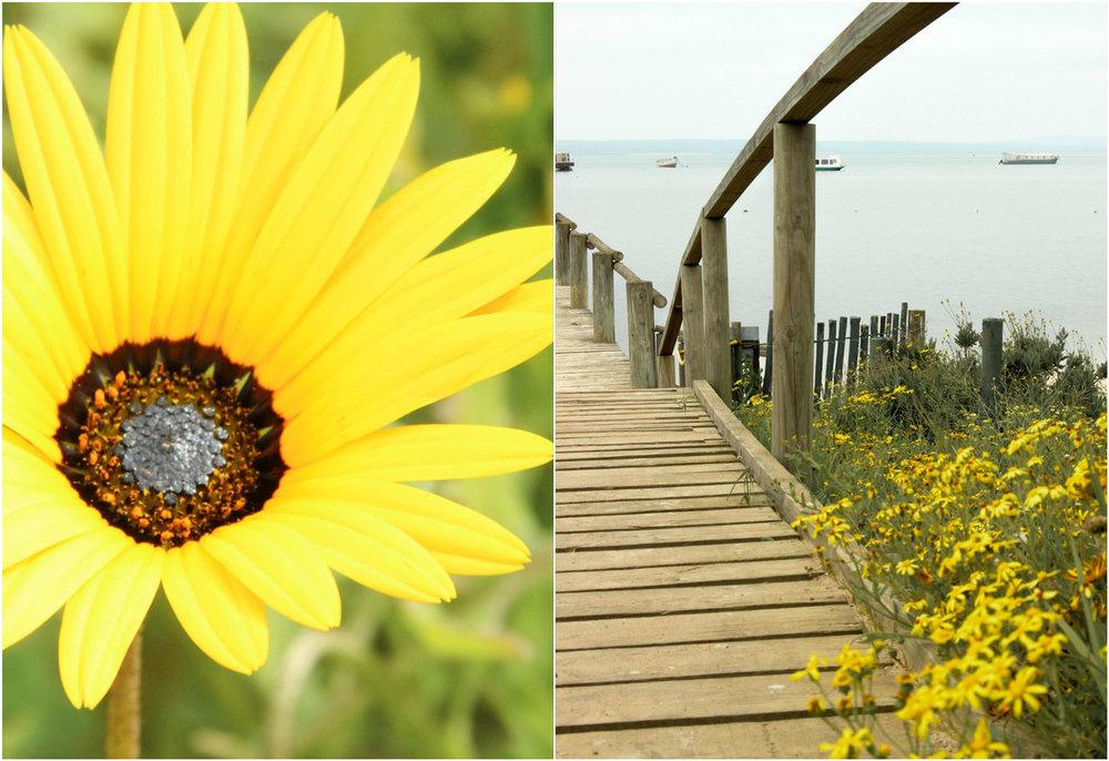 West_Coast_flowers_2.jpg