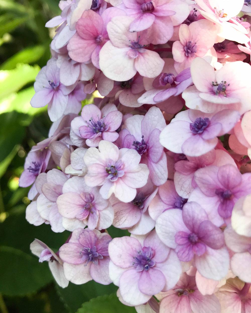 flowers_western_cape.jpg