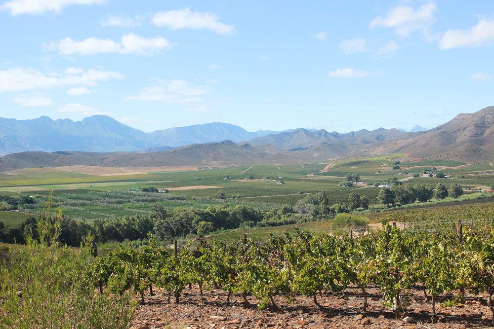hiking_wine_farms_robertson.jpg