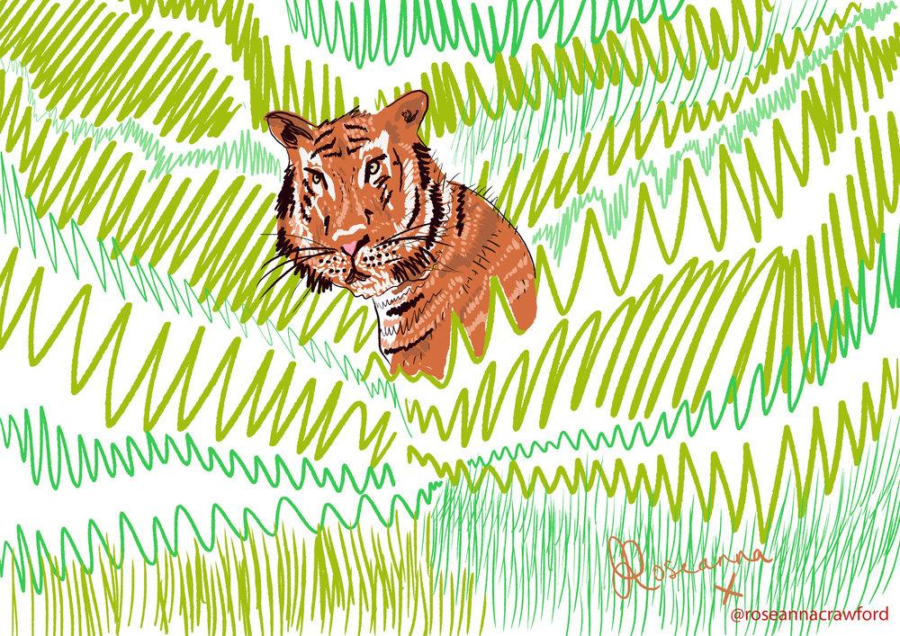 tiger website.jpg
