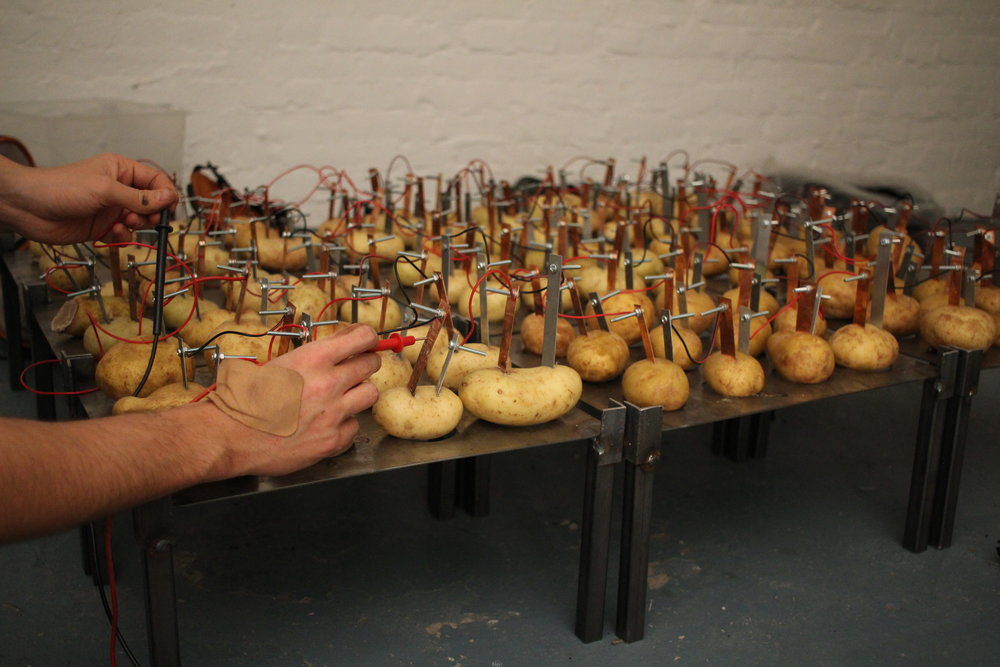 (potato battery electrical test), 2016