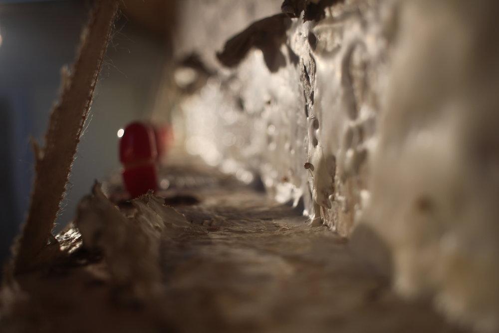 Plywood, cardboard, grey oyster mushroom mycelium, babybels, sack cloth.