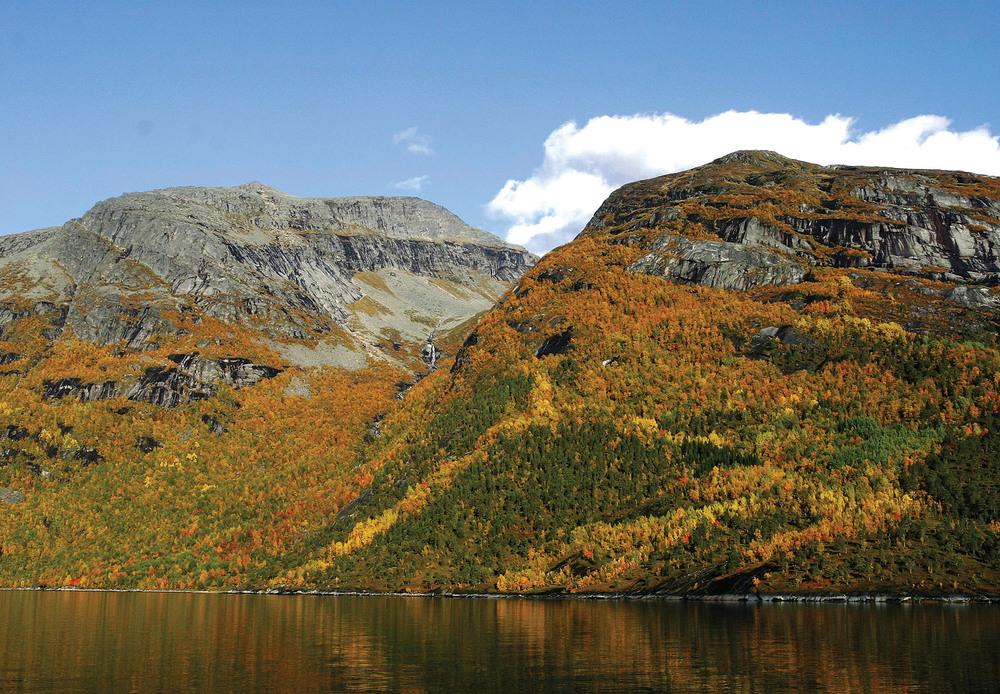 Nordland er det fylket som har størst volum av lauvtrevirke med 32 mill. m3. Mørsvikfjorden i Sørfold. Foto: Per K. Bjørklund, © Skog og landskap