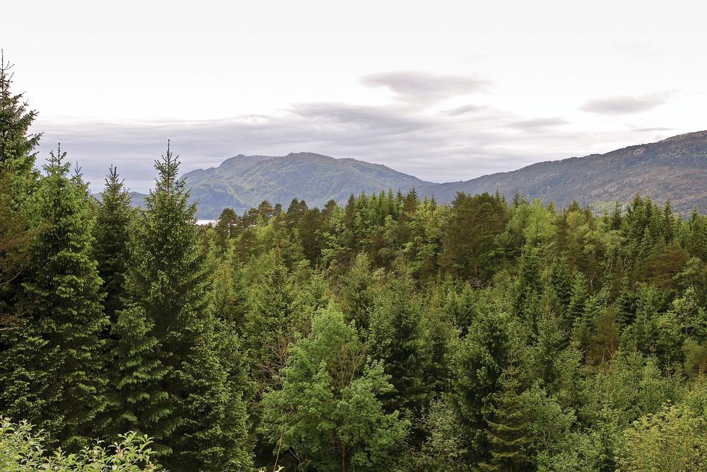 På Vestlandet er det naturlig lauv- og furuskog. Tilplanting med gran gjør at det nå er like mye barskog som lauvskog. Fusa, Hordaland. Foto: John Yngvar Larsson, NIBIO