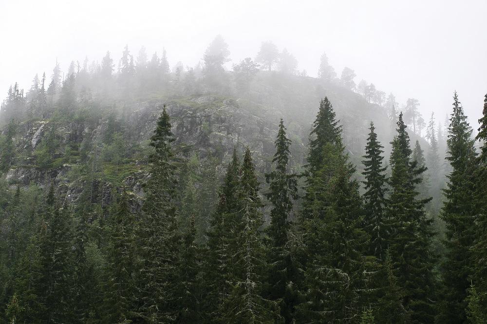 Skogen i Norge blir stadig eldre og andelen gammelskog øker. Begnadalen, Oppland. Foto: John Yngvar Larsson, NIBIO