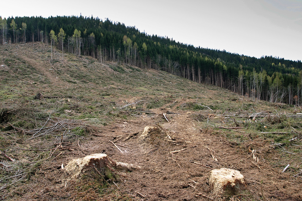 Skogsmark som ikke har foryngelse klassifiseres som hogstklasse I. Ringerike, Buskerud. Foto: John Yngvar Larsson, NIBIO