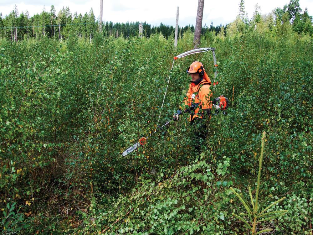 Mellom 2007 og 2016 ble det utført ungskogpleie på litt under 2,9 millioner dekar. Foto: Gunnhild Søgaard, NIBIO